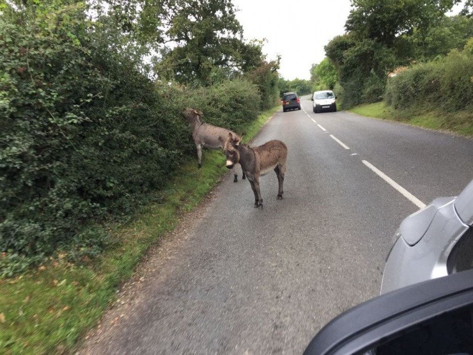 Wild donkeys wandering onto the road, spotted while delivering fused glass art!