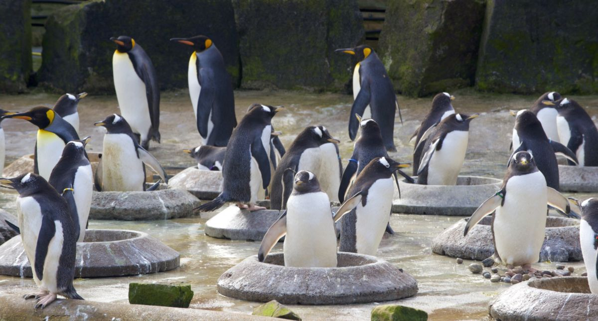 Some real penguins, not the kind that find their way into our fused glass art!