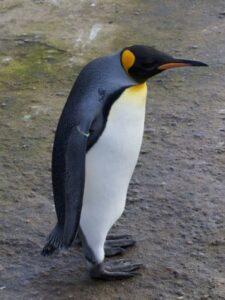 Penguin Fused Glass Art 3